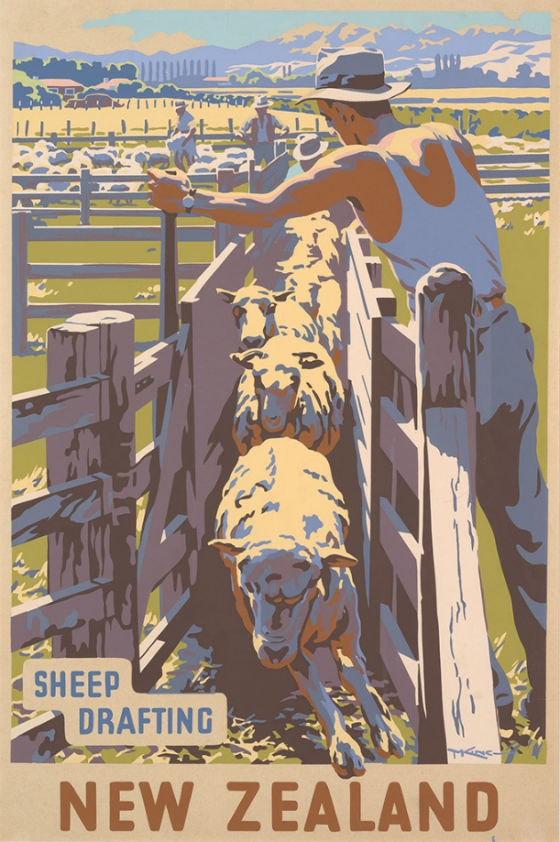 Sheep Drafting