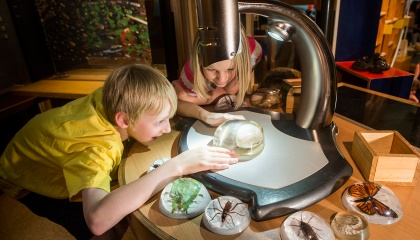 Discovery our natural history centre for kids is fun and educational