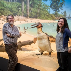 Meet life-size models of Squawkzilla and Waipara's giant penguins