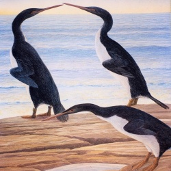 Ancient penguins lived alongside dinosaurs?